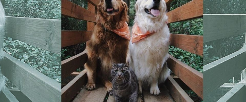 Conheça uma emocionante história de amizade entre dois cães e um gato
