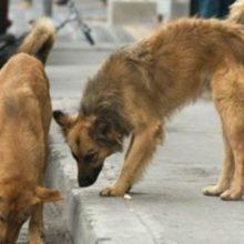 Dupla de cães entram em ação e salvam uma mulher de um assalto