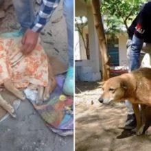 Eles resgatam um cão de rua que não conseguia andar, ajudaram ele com fisioterapia e agora ele pode correr