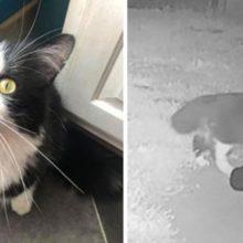 Este gato adora roubar os sapatos dos vizinhos a sua tutora teve que criar um grupo no Facebook para devolvê-los