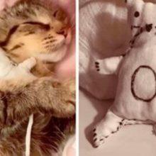 Gatinha perde o bebê e sua dona faz um gatinho de pelúcia para confortá-la