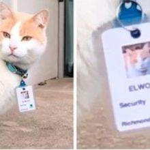 Gato passa um ano no hospital e acaba sendo contratado como segurança