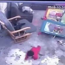 Gato vê risco de queda de bebê e salva ele de cair em escada; vídeo