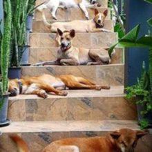 História emocionante! Casal perde cachorro e resolve adotar outros 15 cães
