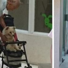 Idoso leva seu cãozinho idoso também em um carrinho de bebê ao veterinário