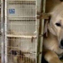 Mulher não consegue decidir qual cão salvar, então resolve comprar o abrigo inteiro