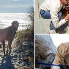 No dia que casou, noiva leva o seu cão em estado terminal para ver o mar pela primeira vez