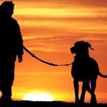 Pesquisadores revelam que perder um cão pode ser tão difícil quanto perder um ente querido
