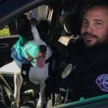 Policiais levam cães de abrigo em passeios pela cidade para aumentar suas chances de adoção
