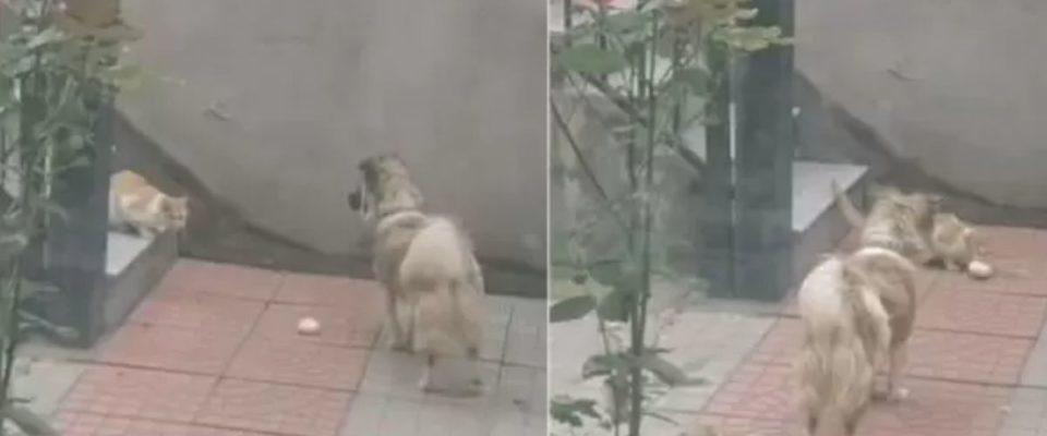 Tutor filma seu cão entregando um pão para um gato faminto da rua