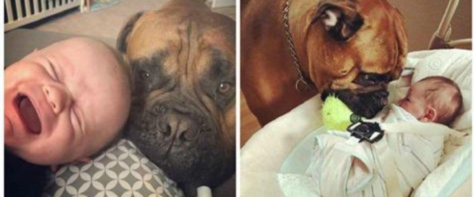 Um cão sempre oferece seu brinquedo favorito sempre que ouve o bebê chorando
