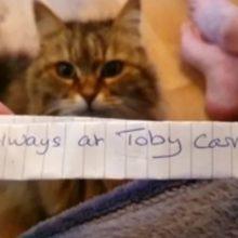 Um gato retorna a casa com um bilhete que faz sua tutora dar risada