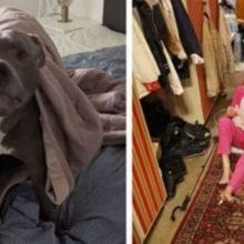 Uma idosa não gostava de cães e foi salva por um quando mais precisou