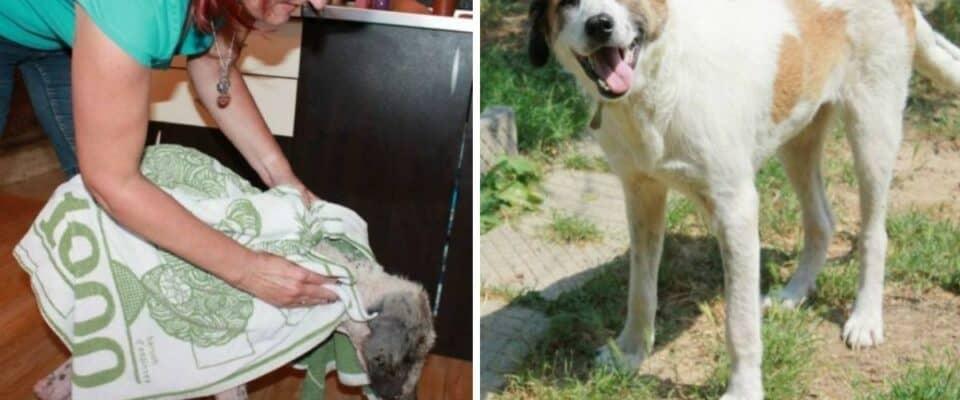 Homem salva cachorro de rua na beira da morte e ele se transforma completamente