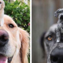 Artista cria versões realistas e minúsculas de feltro de cães você vai se apaixonar