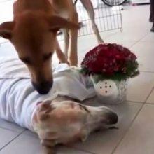 Cachorro de rua falece e seu melhor amigo canino vem para dizer um adeus