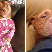 Cachorro não para de sorrir depois de ser adotado e emociona a todos