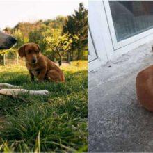 Cachorro saiu para passear, voltou com um filhote abandonado e o adotou