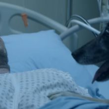 Cachorro salva o dono, mas o que houve antes do acidente ninguém podia imaginar