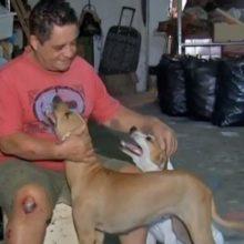 Cachorros Salvam Tutor Durante Um Assalto, Ele Comentou Que Nasceu De Novo