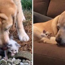 Cão adota gatinho perdido que encontrou sozinho, agora eles são melhores amigos