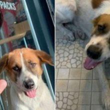 Cão De Rua Encontra Local De Trabalho De Jovem Que o Alimenta Para Agradecer