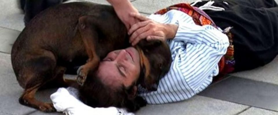 Cão de rua interrompe uma peça para confortar o ator que fingia estar ferido