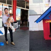 Cão De Rua Que Ficava Rondando Supermercado é Adotado Por Dono Do Local e Faz Sucesso