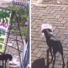 Cão é Flagrado Pegando Pote De Ração Cheio e Onde Ele Levou Vai Te Surpreender