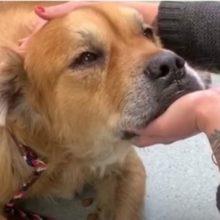 Cão idoso do abrigo coloca a pata na mulher e comemora que foi adotado
