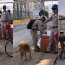 Cão Que Aparecia Na obra é Adotado Por Trabalhadores e Vira Mascote Da Empresa