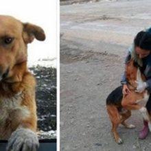 Cão Que Morava Em Um Depósito De Lixo Pediu Para As Pessoas o Levarem Para Casa