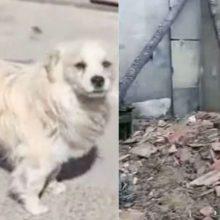 Cão vira-lata leal acorda seus donos para avisar sobre incêndio e salva eles