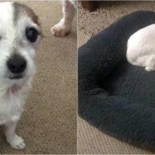 Cãozinho é adotado e carrega a tigela de comida por toda parte com medo de perder ela