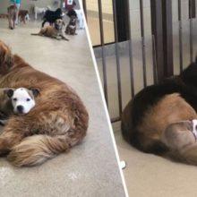 Cãozinho Faz Amizades Com Cães Fofos e Maiores Da Creche Para Que Possa Dormir Neles