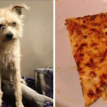 Cãozinho Roubou Fatia De Pizza Para Filhotes Famintos e é Adotado