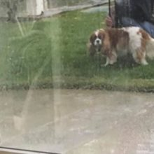 Esse homem não queria cachorro em casa, ele é flagrado em atitude fofa