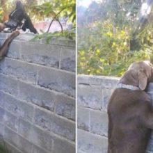 Família dá um Banquinho para seu cão para que ele possa visitar os cães vizinhos