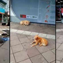 Farmácia cuida de cães de rua em Canela – RS uma linda atitude