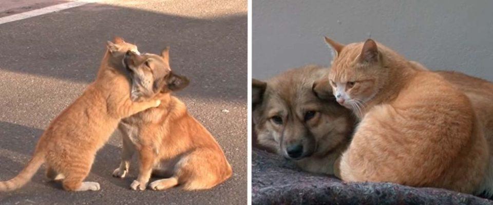 Gatinho de rua conforta cão que foi abandonado pela família