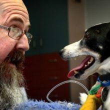 Homem Salva Cachorro Com Respiração Boca-a-Boca e Massagem Cardíaca