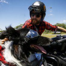Homem salva cão e ganha fiel companheiro. Pelo cãozinho até ex-namorada ele enfrentou