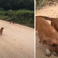 Jovem encontra cães abandonados na estrada e decide adotá-los