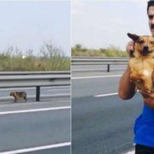 Médico veterinário resgata cachorro no meio de rodovia movimentada