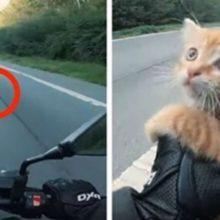 Motociclista Para Trânsito Na Estrada Para Salvar Gato Que Estava Em Perigo