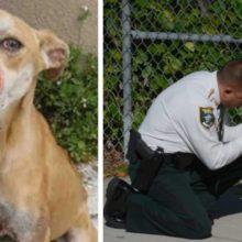 Policial Resgatou Cão Com Focinho Enfaixado e Decidiu Adotar Ele – Virou Mascote Da Delegacia