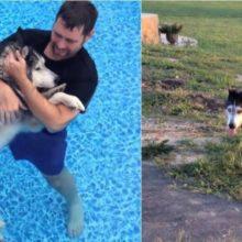 Tutor faz terapia na piscina com seu cão paralítico para aliviar as dores e ele volta a andar