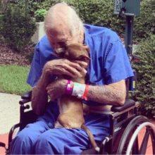 Um Cãozinho Chihuahua salva a vida do seu dono idoso