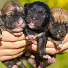 Vereadores aprovam lei que proíbe a venda de filhotes de cães e gatos