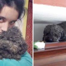 Amor incondicional : tutora morreu há 4 anos e seu cão sabe exatamente em qual caixão abraçar